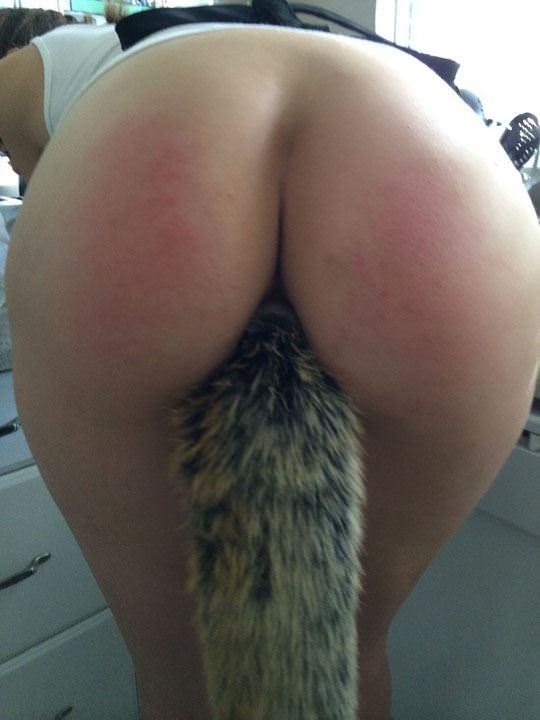 【外人】しっぽ型アナルプラグを差し込んでアニマルコスプレをしてる可愛いポルノ画像 2915