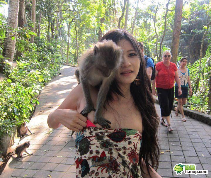 SNSにビキニをアップするセクシーアジアン娘が猿に襲われおっぱいポロリwwwww 0718