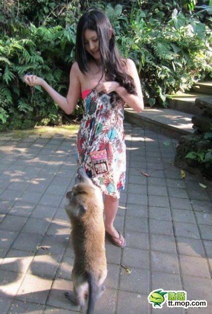 SNSにビキニをアップするセクシーアジアン娘が猿に襲われおっぱいポロリwwwww 0722
